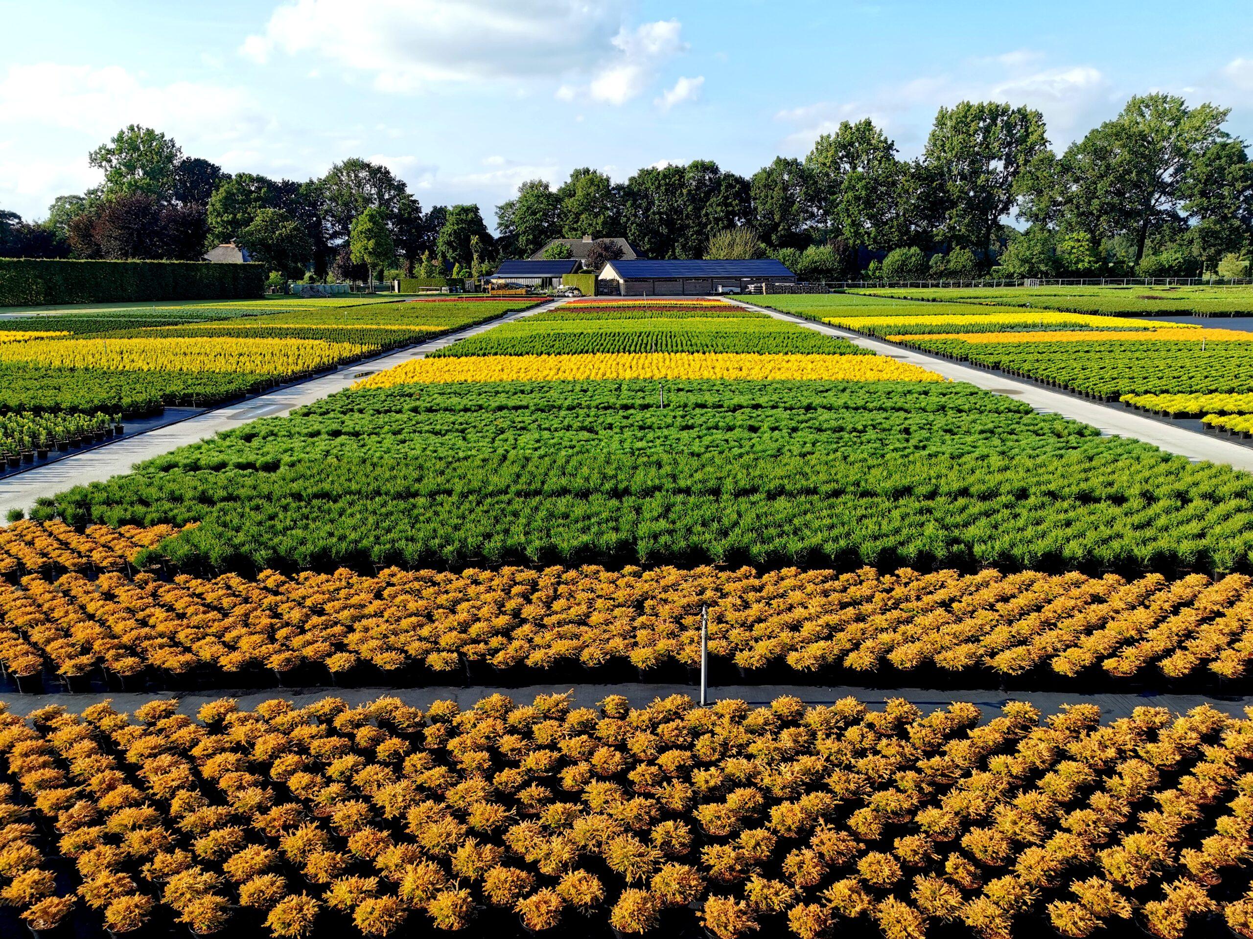 Kwekerij-coniferen-zomer-scaled